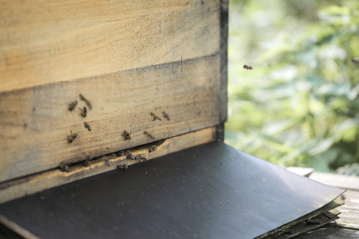 phi Hosting Jülich |Bienen Umwelt Öko Grün Natürlich Zukunftsorientiert